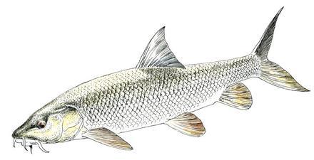 Les Fiches Poissons Génération Pêche